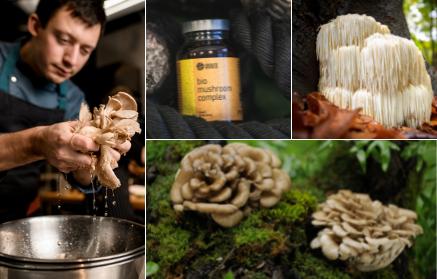 Jaké účinky mají medicinální houby?